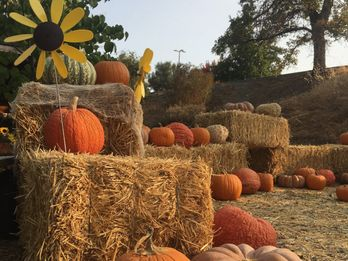 Halloween Fun: Family-Friendly Events in Calaveras