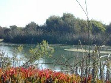 Santa Clara River Estuary